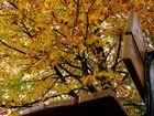 ...Herbststimmung...