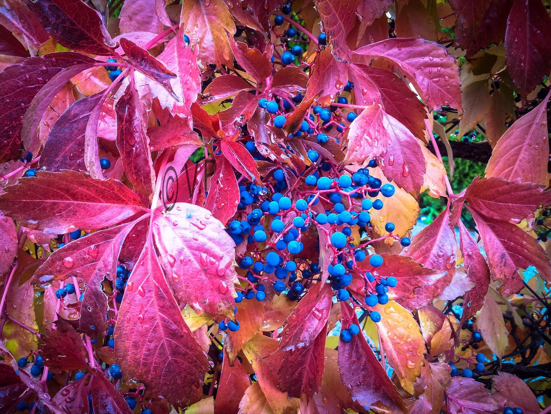 Herbststimmung.....