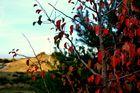 Herbststimmung am LEUCHTTURM