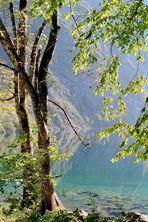 Herbststimmung am Obersee