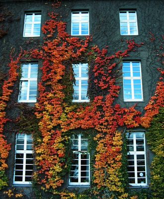 Herbststimmung am Rathaus Spandau III