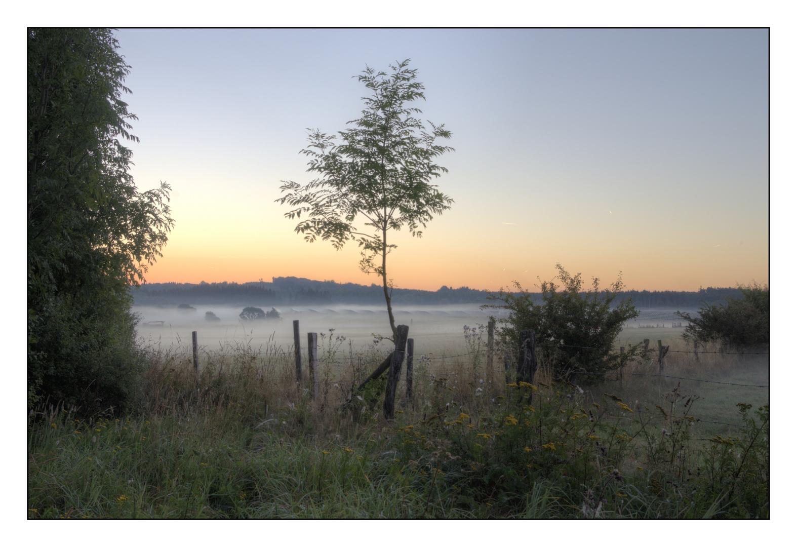 Herbststimmung Anfang September im Westwald