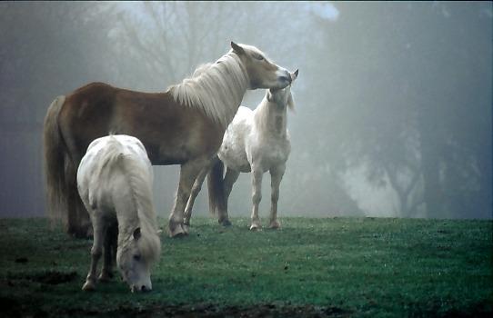 Herbststimmung auf einer Pferdekoppel