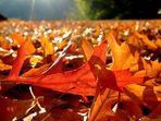 Herbststimmung aus der Sicht einer kleinen Maus