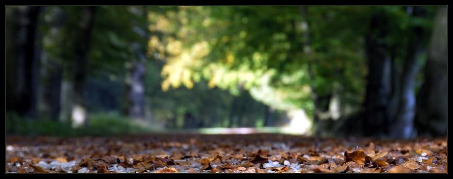 Herbststimmung III