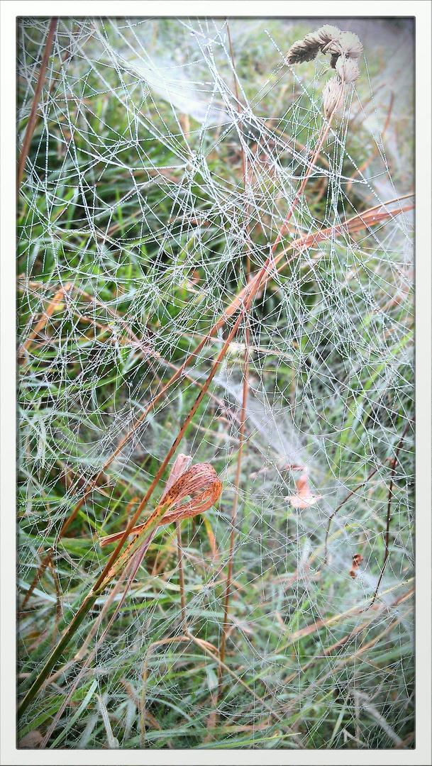 Herbststimmung im Auenwald
