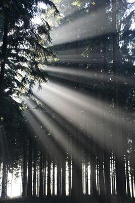 Herbststimmung im Binger Wald