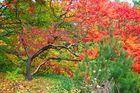 Herbststimmung im Britzer Garten in Berlin