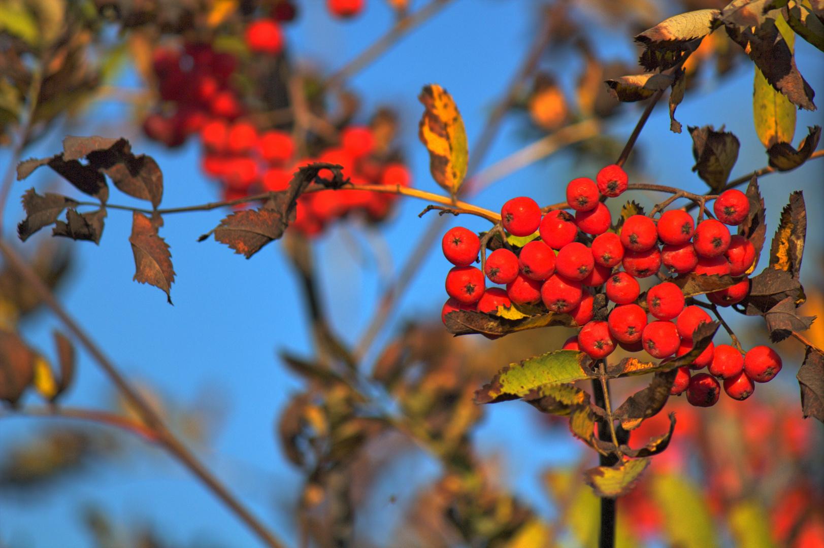 Herbststimmung im Marienfeld bei Götzenkirchen