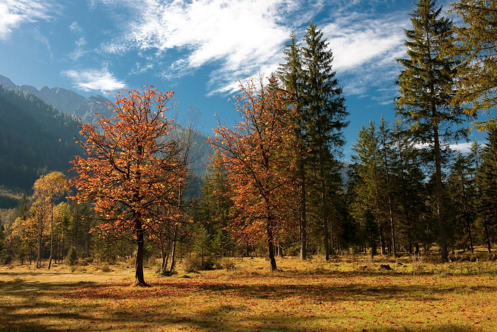 Herbststimmung im NP Berchtesgadener Land