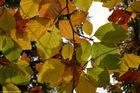 Herbststimmung im Oktober
