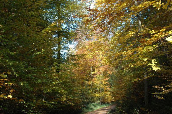 Herbststimmung im Siebengebirge