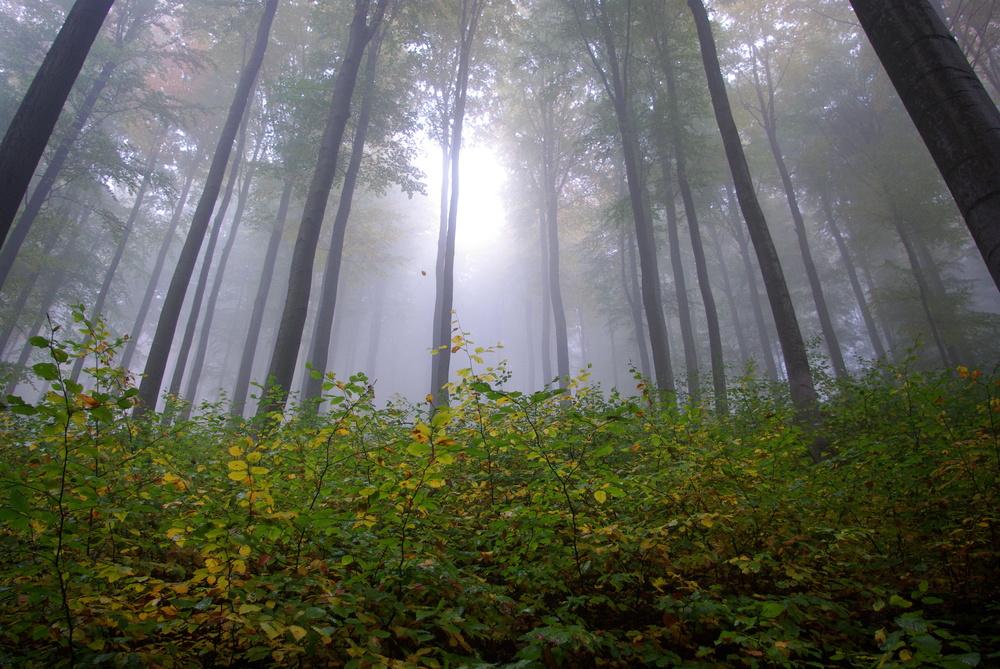 Herbststimmung im Thüringer Wald