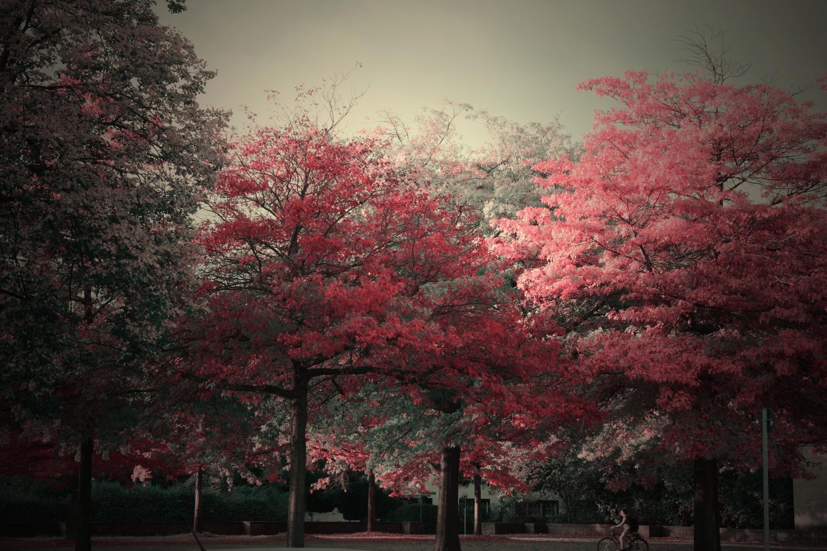 Herbststimmung in D´Dorf