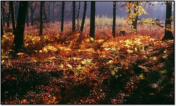 Herbststimmung - in der Nähe von Essen-Kettwig