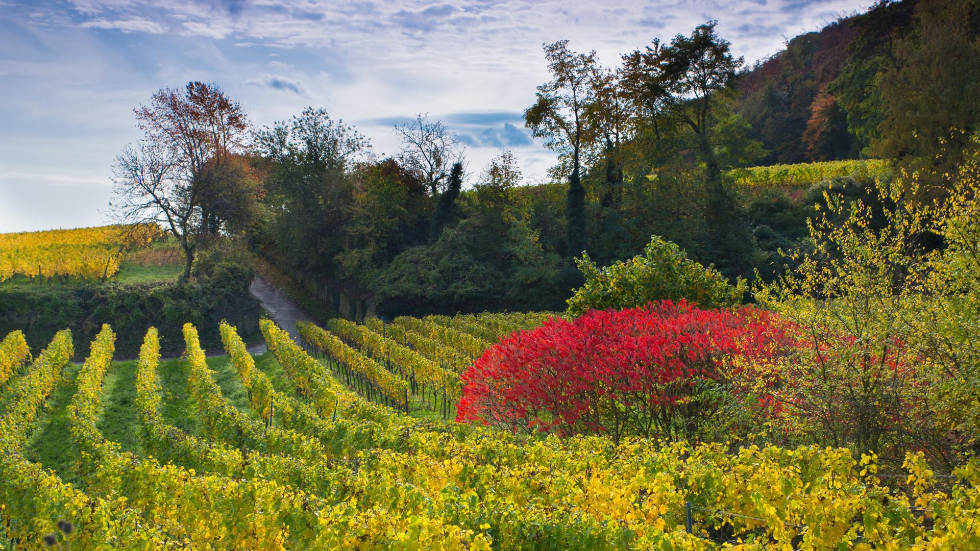 Herbststimmung in der Pfalz