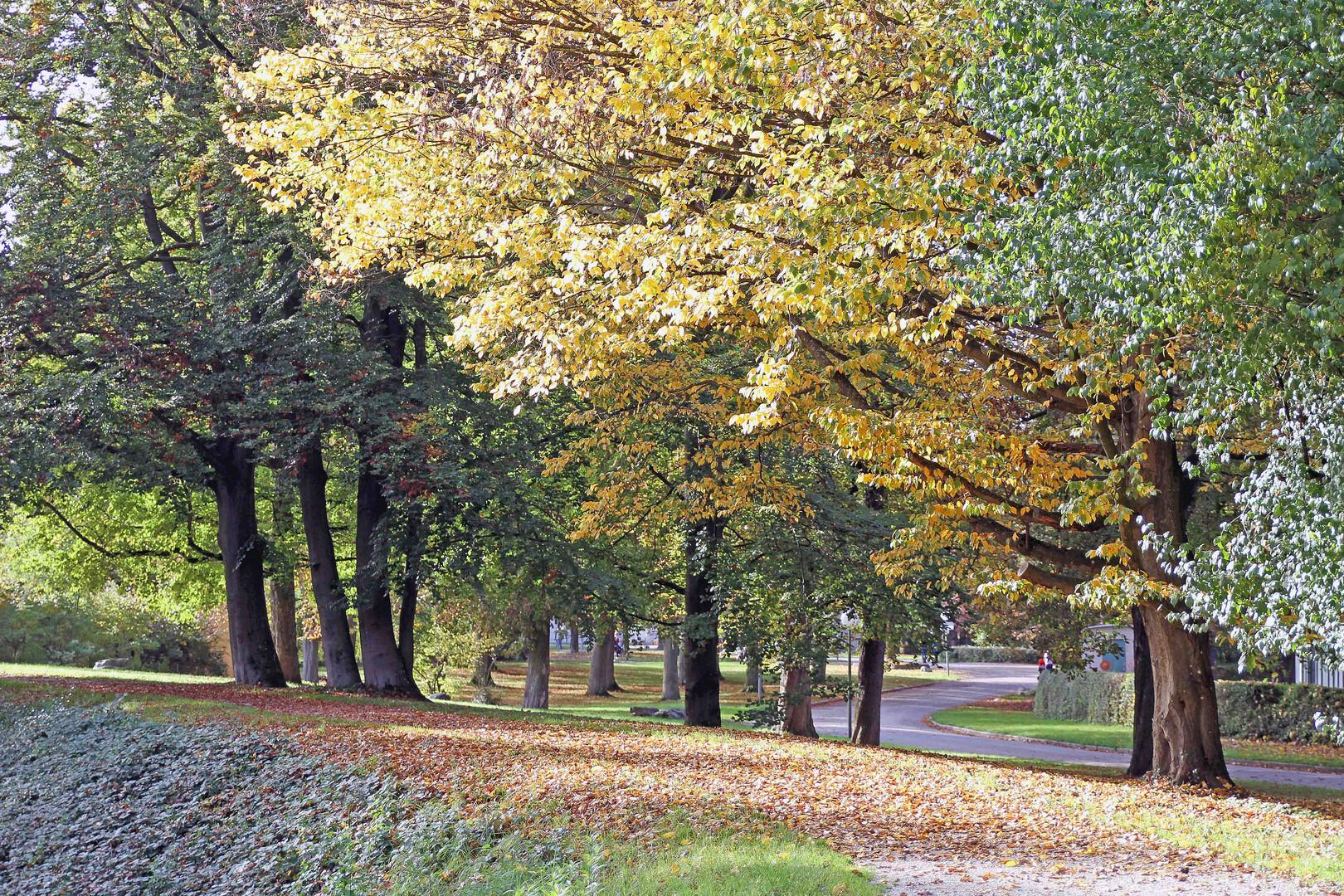 Herbststimmung in der Ulmer Friedrichsau