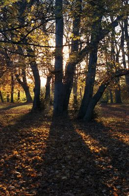 Herbststimmung in München