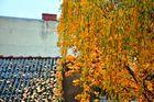 Herbststimmung in Neuköllner Hinterhof