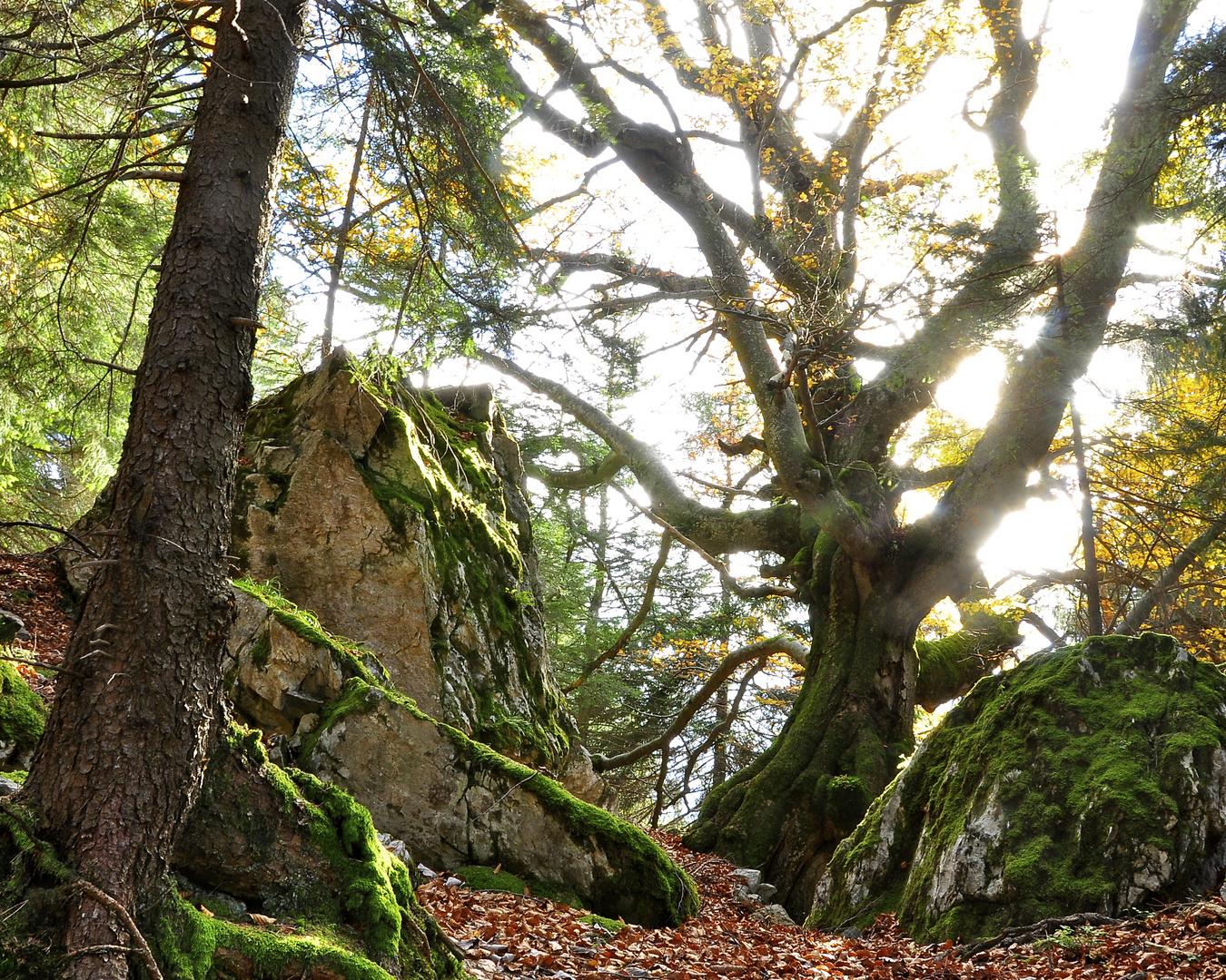 Herbststimmung , Kilcherbergen, Silenen