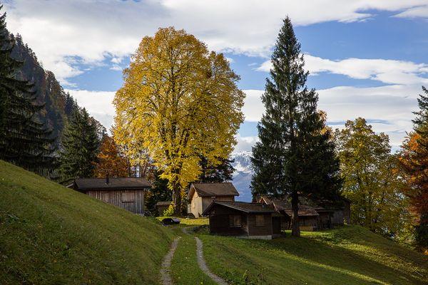 Herbststimmung Magrüel Triesen