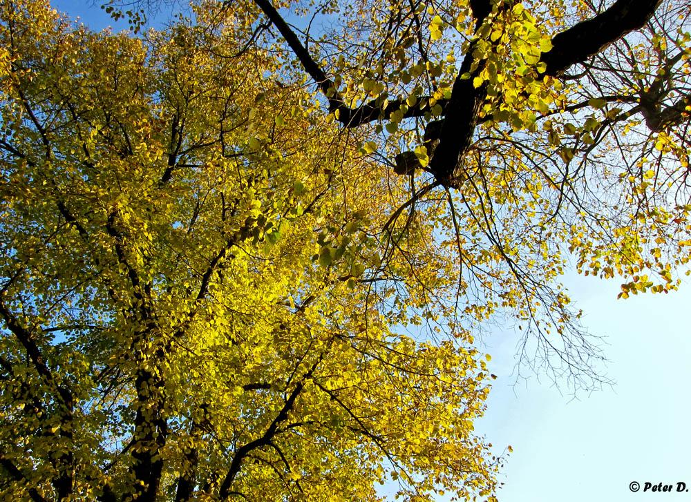 Herbststimmungen (1)