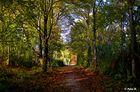 Herbststimmungen (2)