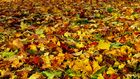 Herbststimmungen (3)