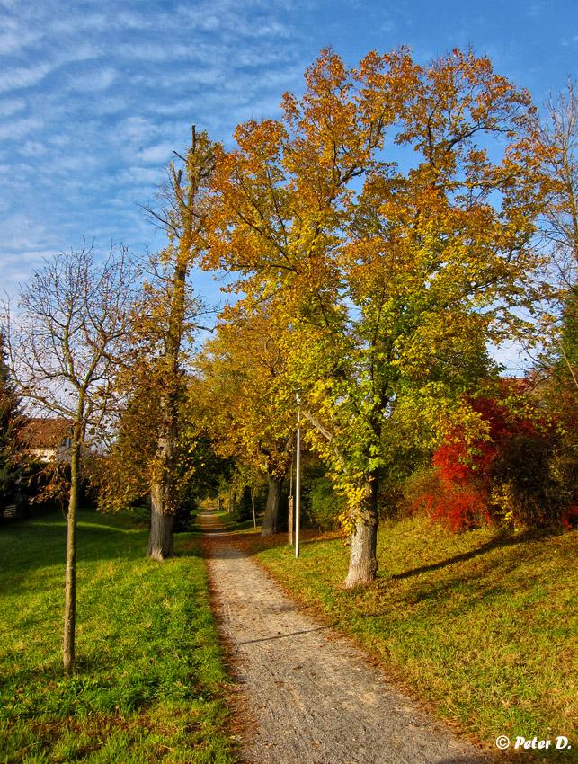 Herbststimmungen (7)