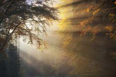 * Herbststrahlen *