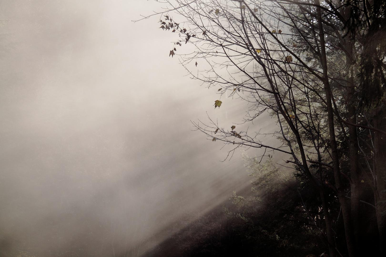 Herbststrahlen I
