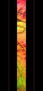 HerbstStrip 2
