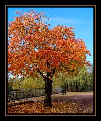 Herbstsymphonie...