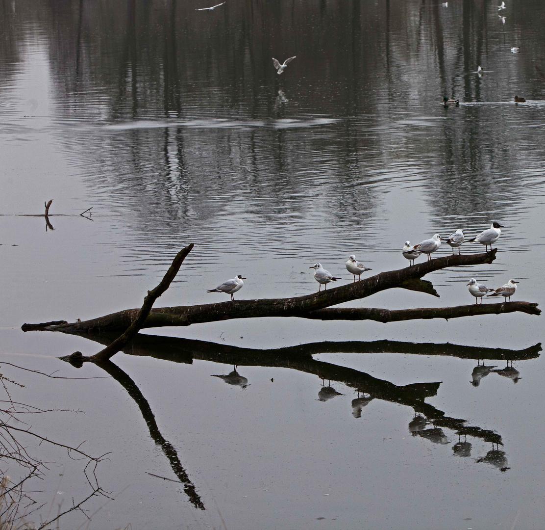 """""""Herbsttag"""" im April an der Donau"""