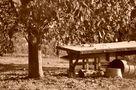 ...Herbsttage ... de SINA