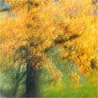 Herbsttage......