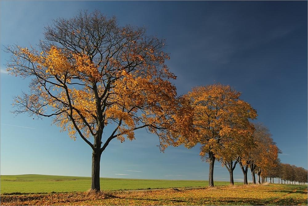 Herbsttage_19.10.2013