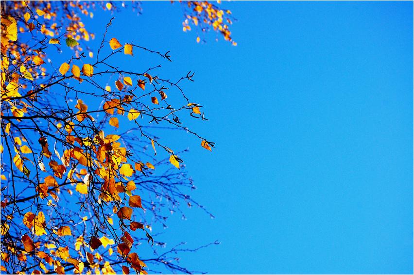Herbsttaler 2