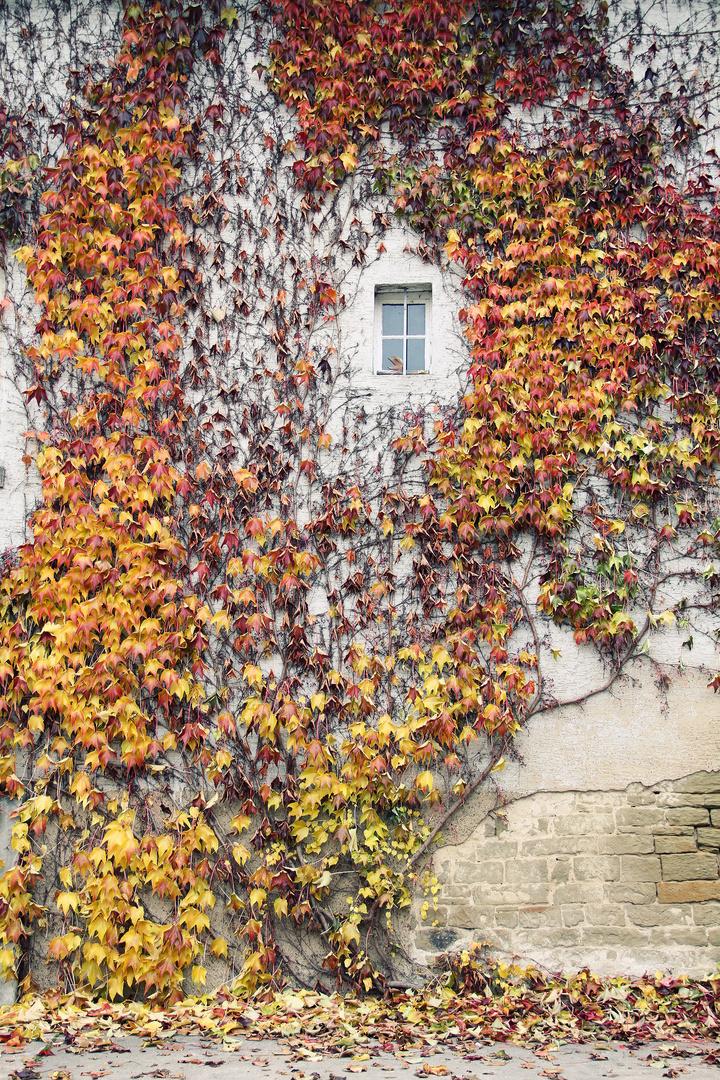 Herbsttöne...
