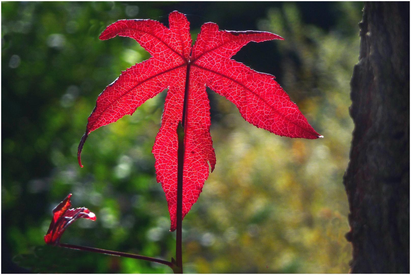 Herbsttöne (2)