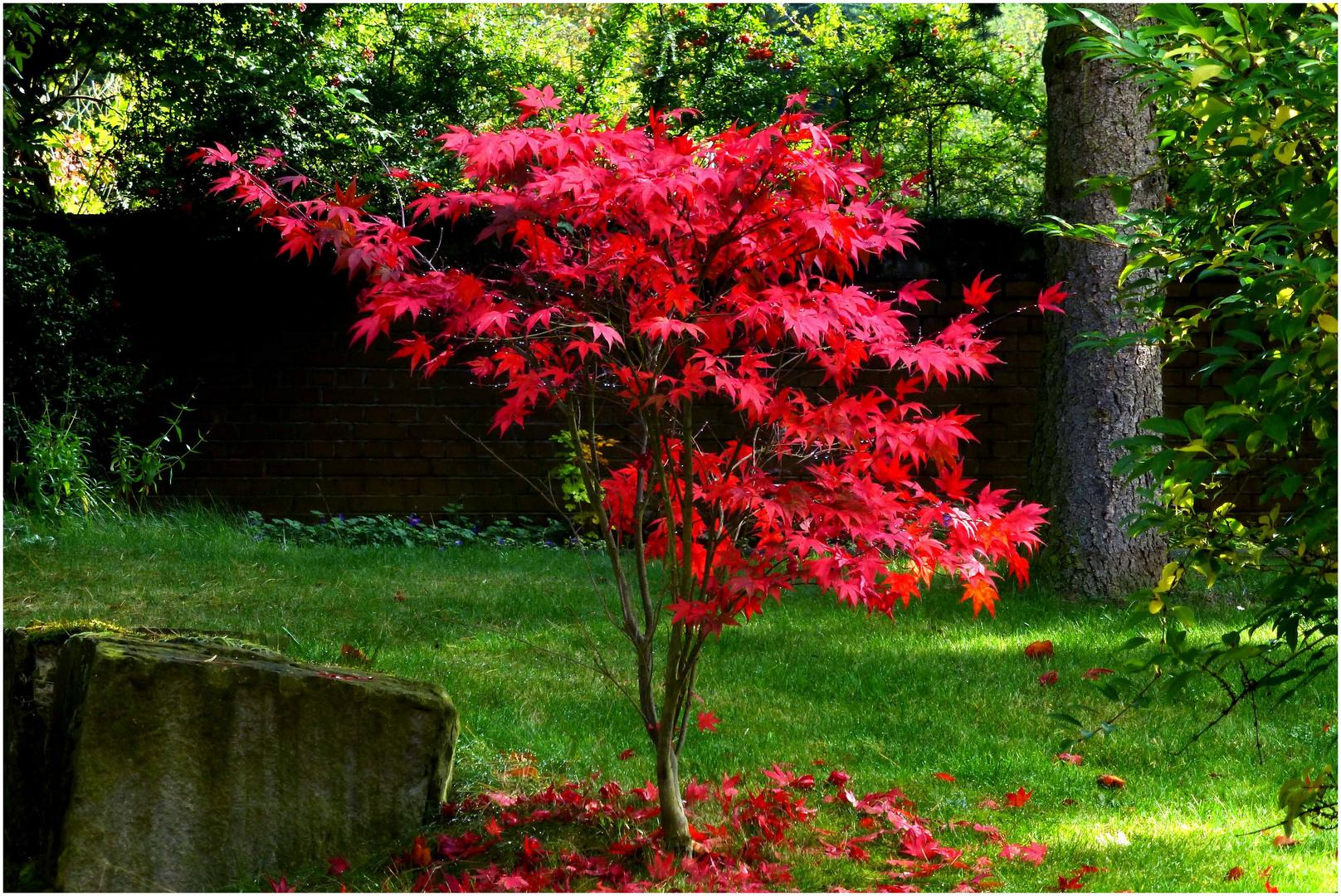 Herbsttöne 2
