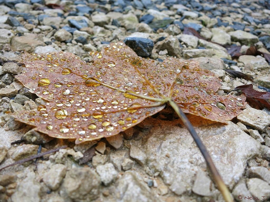 Herbsttränen