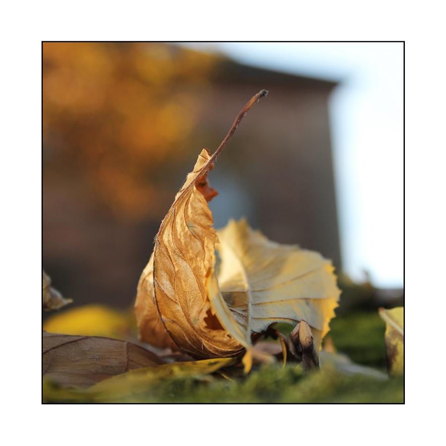 Herbstträume II