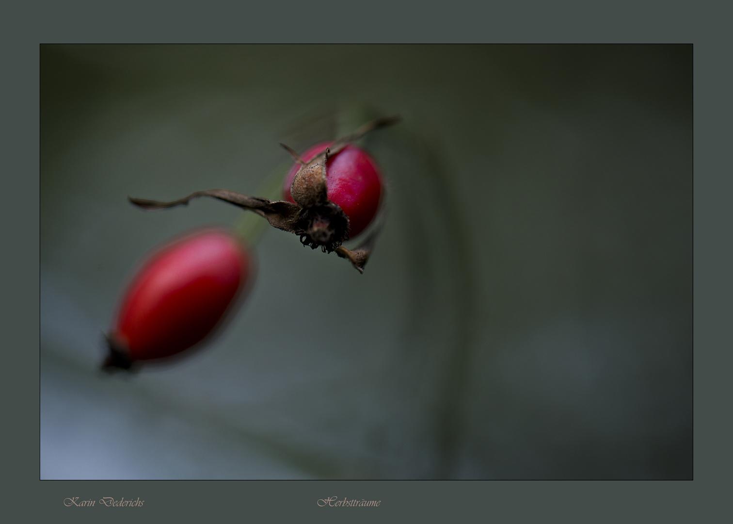 Herbstträume in Rot