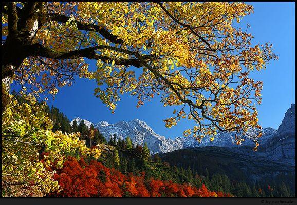 Herbsttraum*