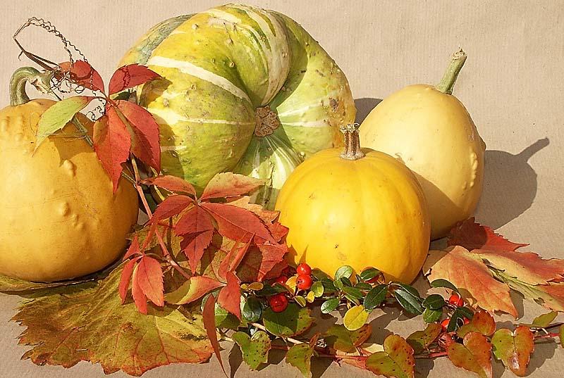 Herbstversammlung