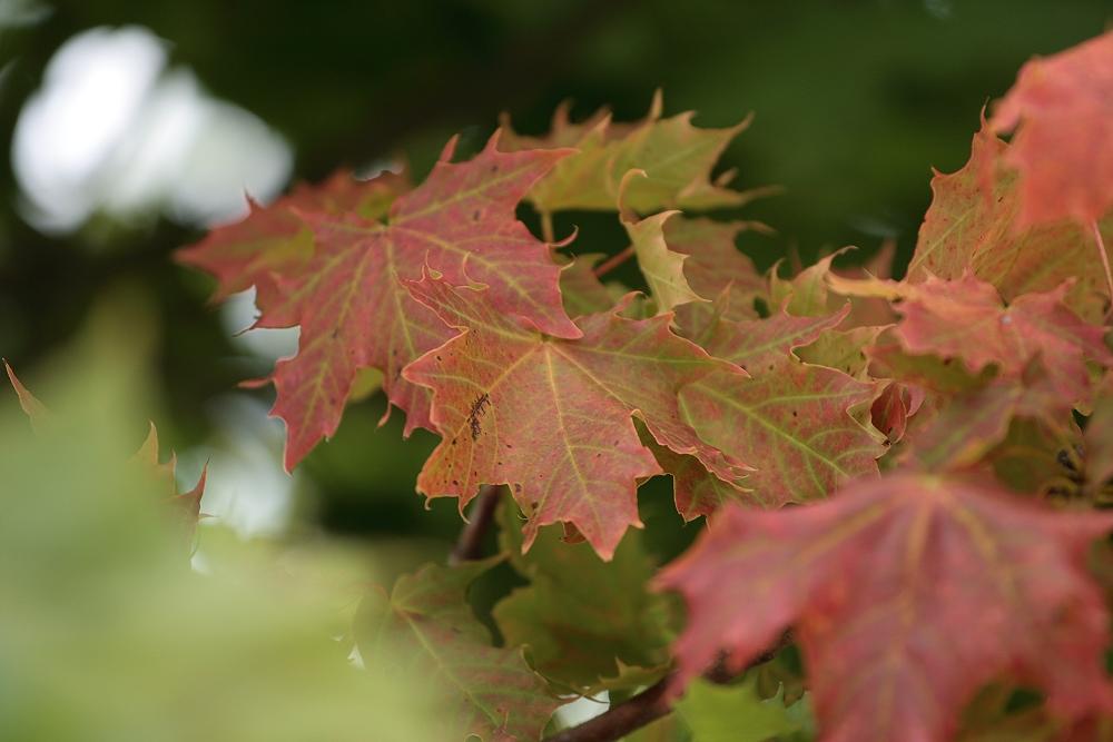 Herbstvorboten...