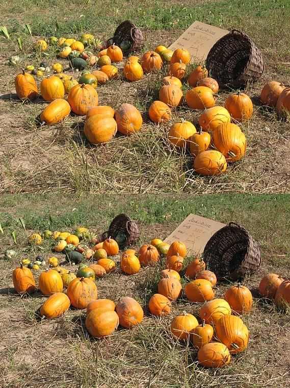 Herbstvorboten