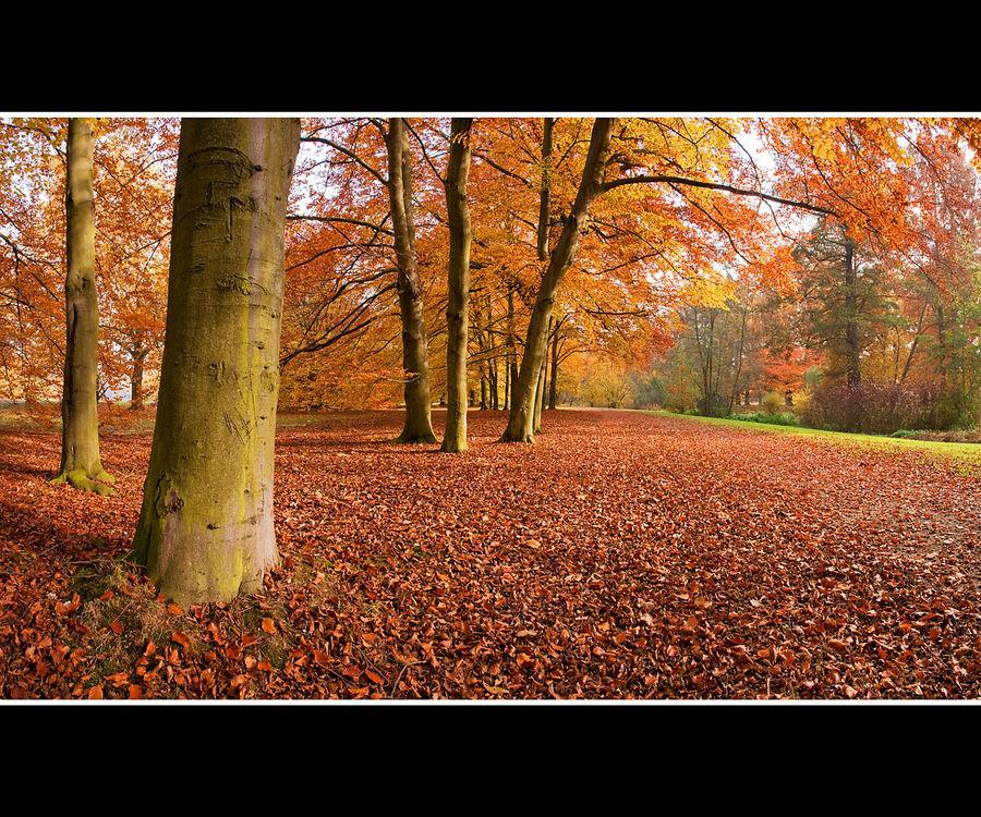 Herbstwald 19