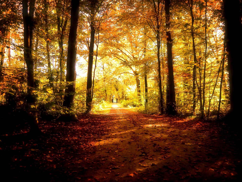 Herbstwald 2013